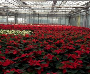 Plantenkweker wil meer besturen